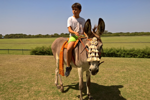 have fun with the donkeys at the horse summer camp in Spain